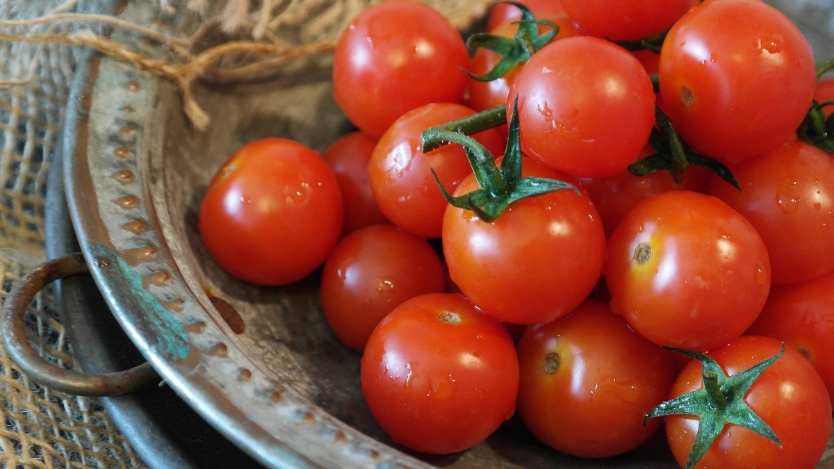 Exploring Tomatoes: Perhaps the Original Forbidden Fruit?