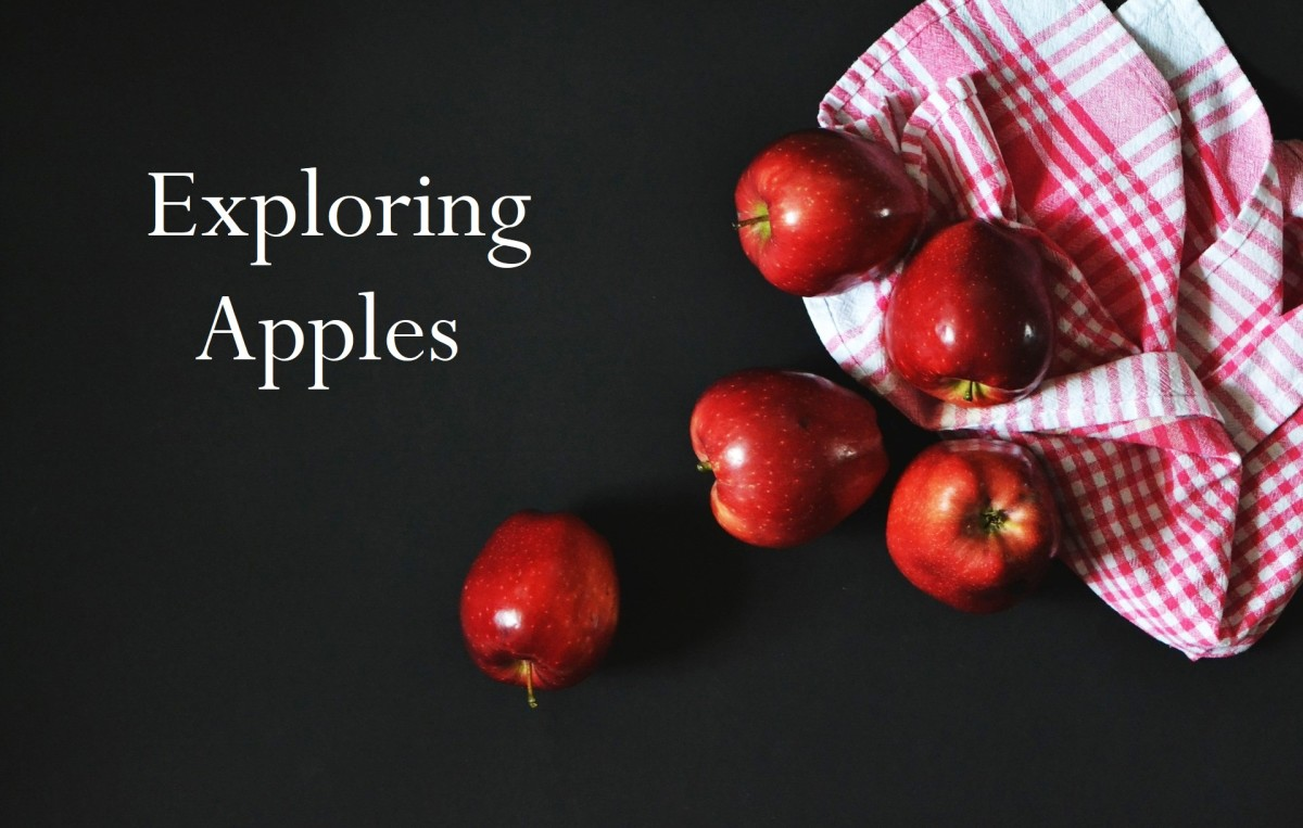 From the Garden of Eden to today, learn all about the history of the apple and how to use it in creative recipes.