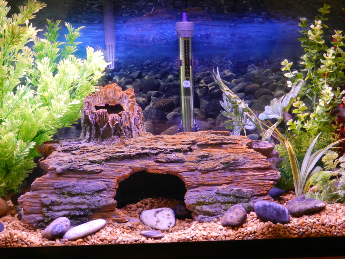 Avoid a cloudy fish tank and keep your water crystal clear by practicing good aquarium maintenance habits.