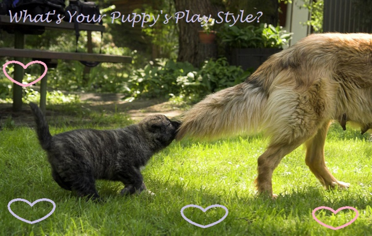 dog breed play style