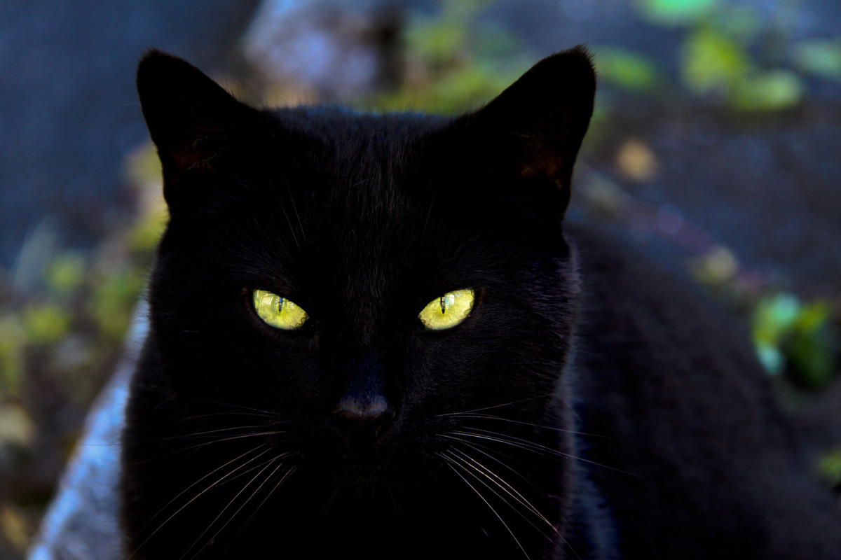 Badass Names for Black Cats