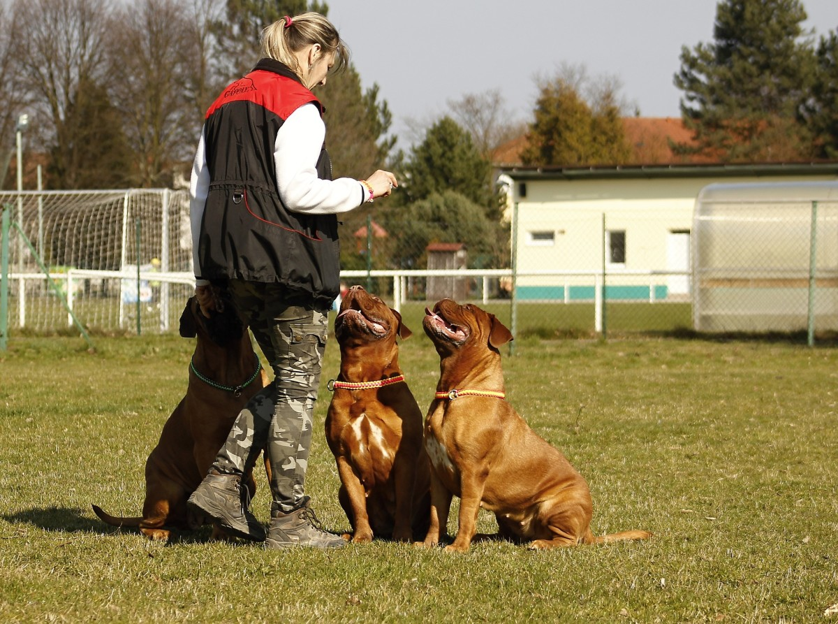 Fading Prompts in Dog Training