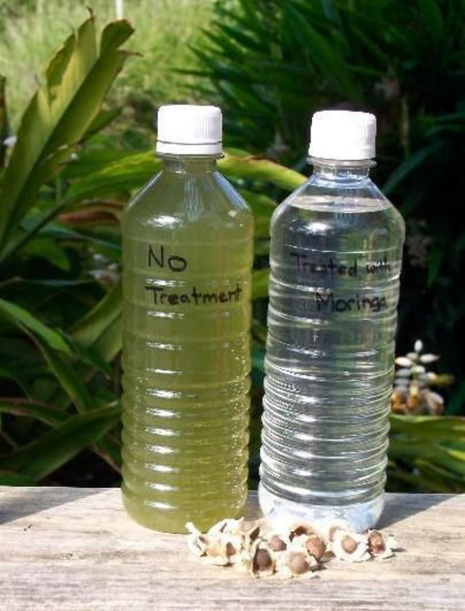 """Studies have shown that Moringa seeds are capable of """"purifying"""" water by prompting the bacteria in water to cluster together and die off."""