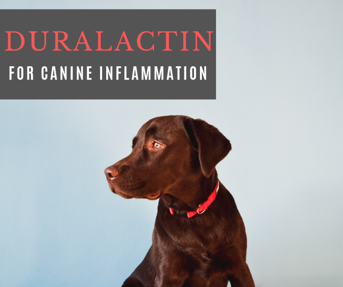 Duralactin: A Promising Product for Inflammation in Dogs