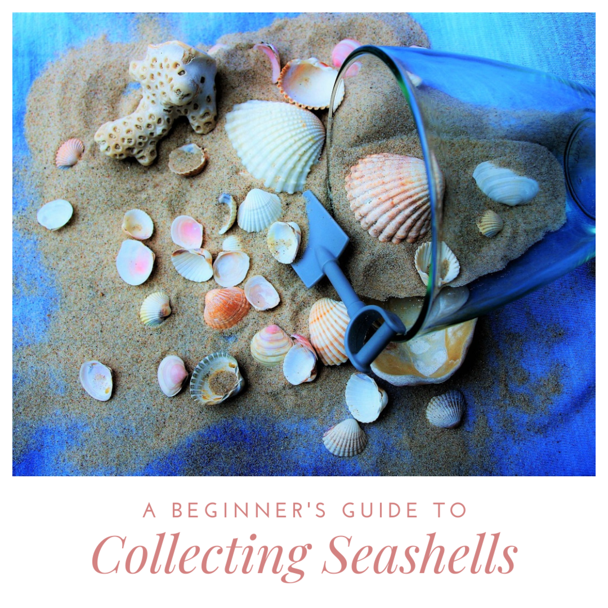 Looking to take up a new hobby? Collecting seashells just might be it!