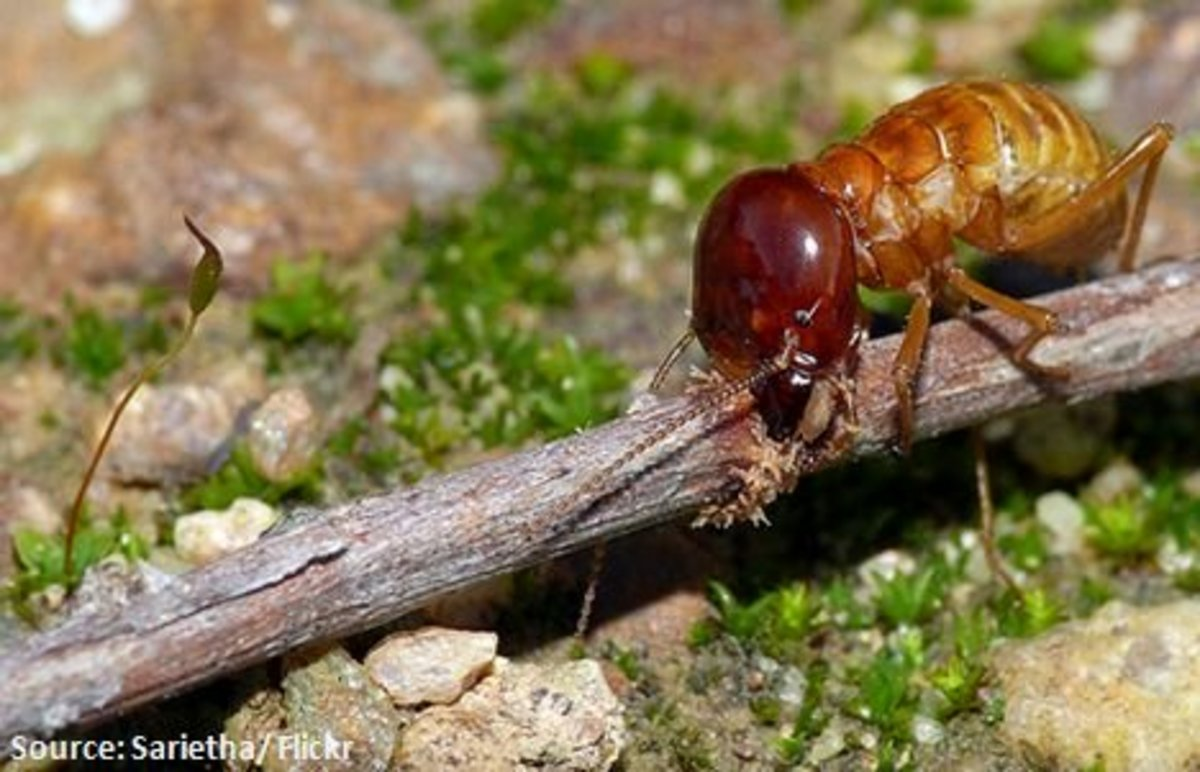 Do Termites Bite People?
