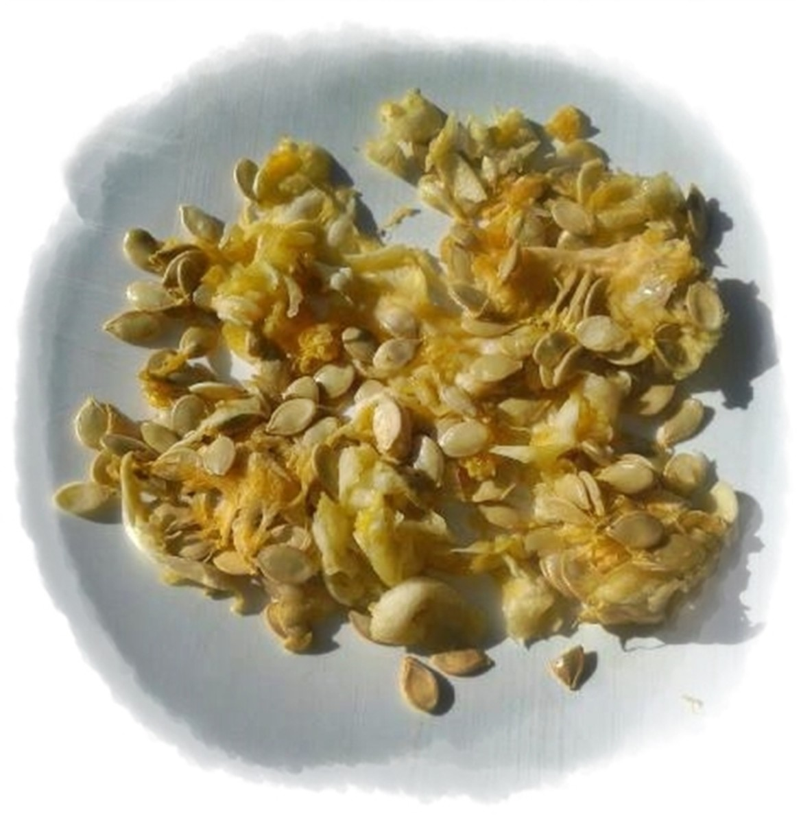 Pumpkin Seed Roasting