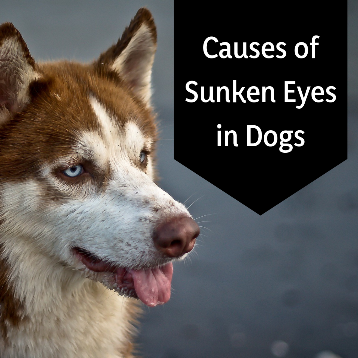 Why Do My Dog's Eyes Look Sunken In?