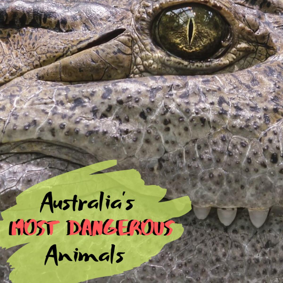 Top 10 Most Dangerous Animals in Australia