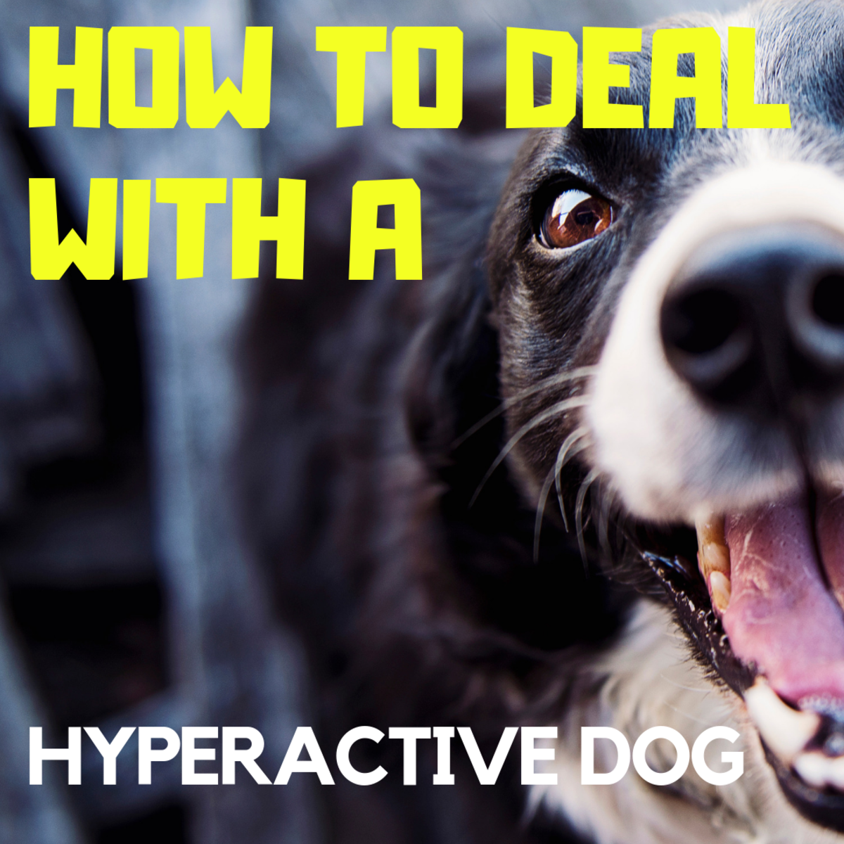 How to Deal With a Hyperactive Dog