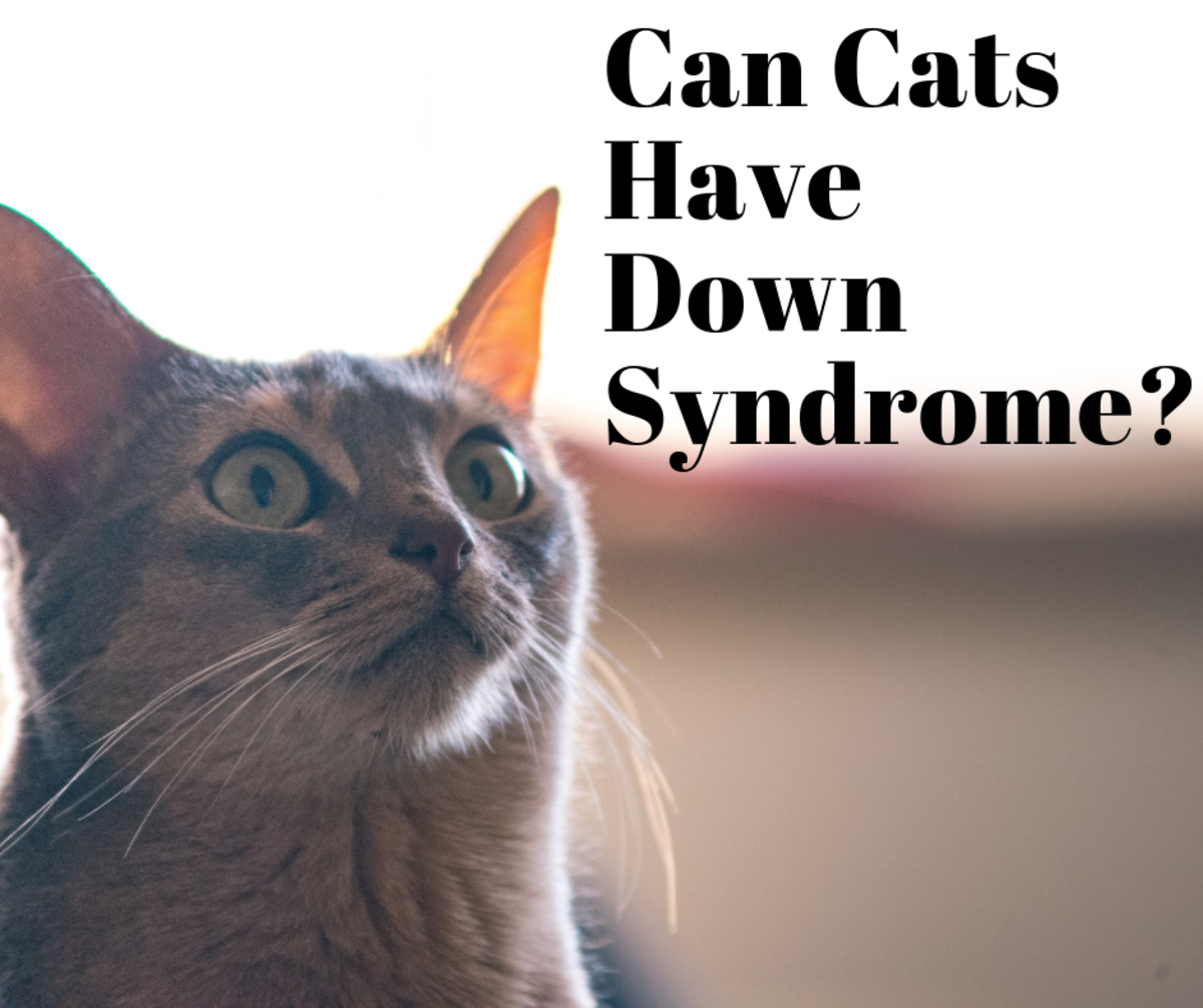 Can Cats Have Down Syndrome? The Lowdown on Feline DS