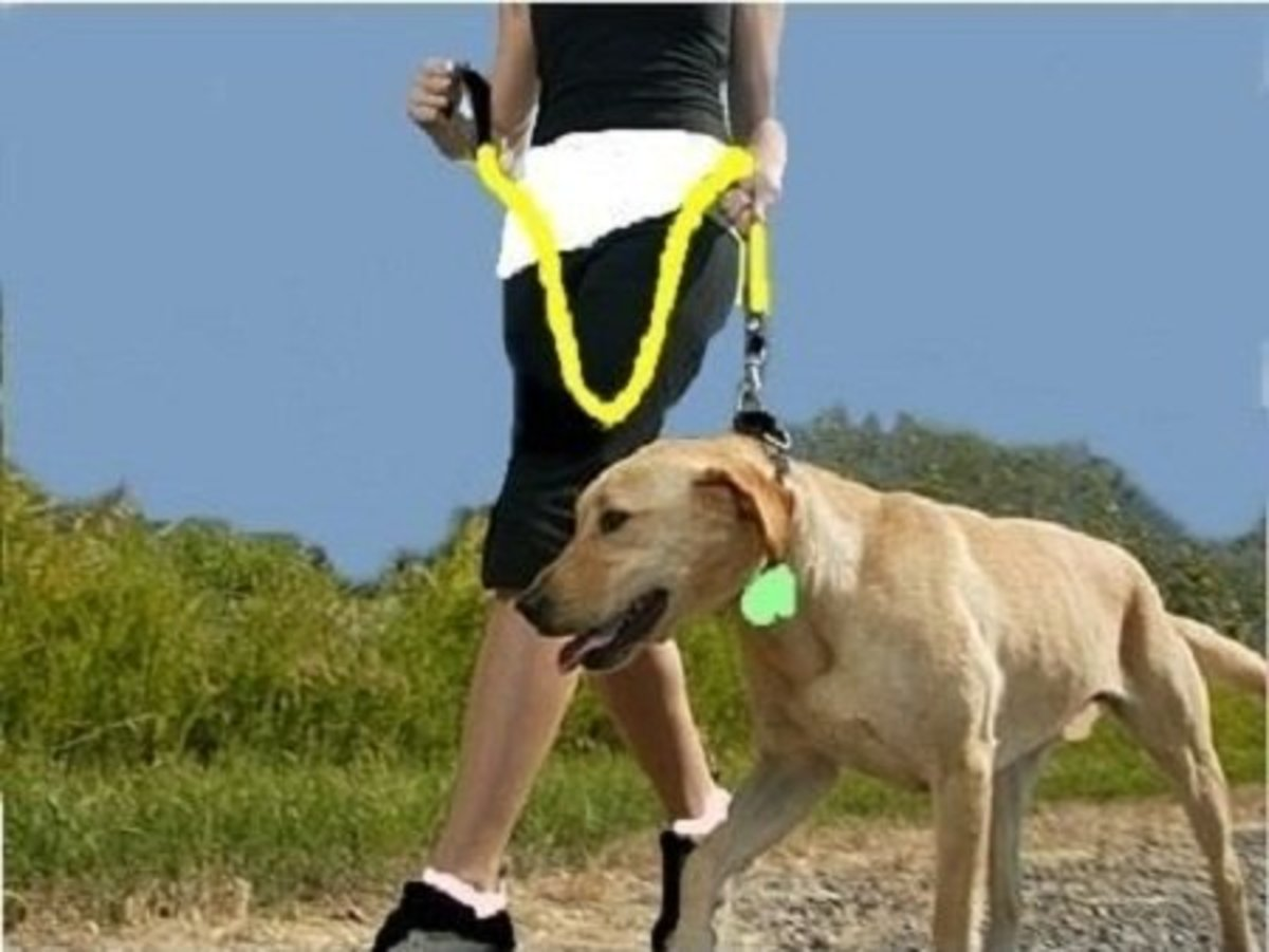 Dog Exercise Program: Preparation and Care for Field Exercises