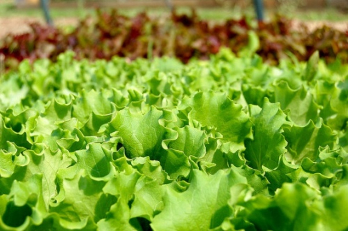 Get Even More Greens by Eating these Leafy Green Vegetables