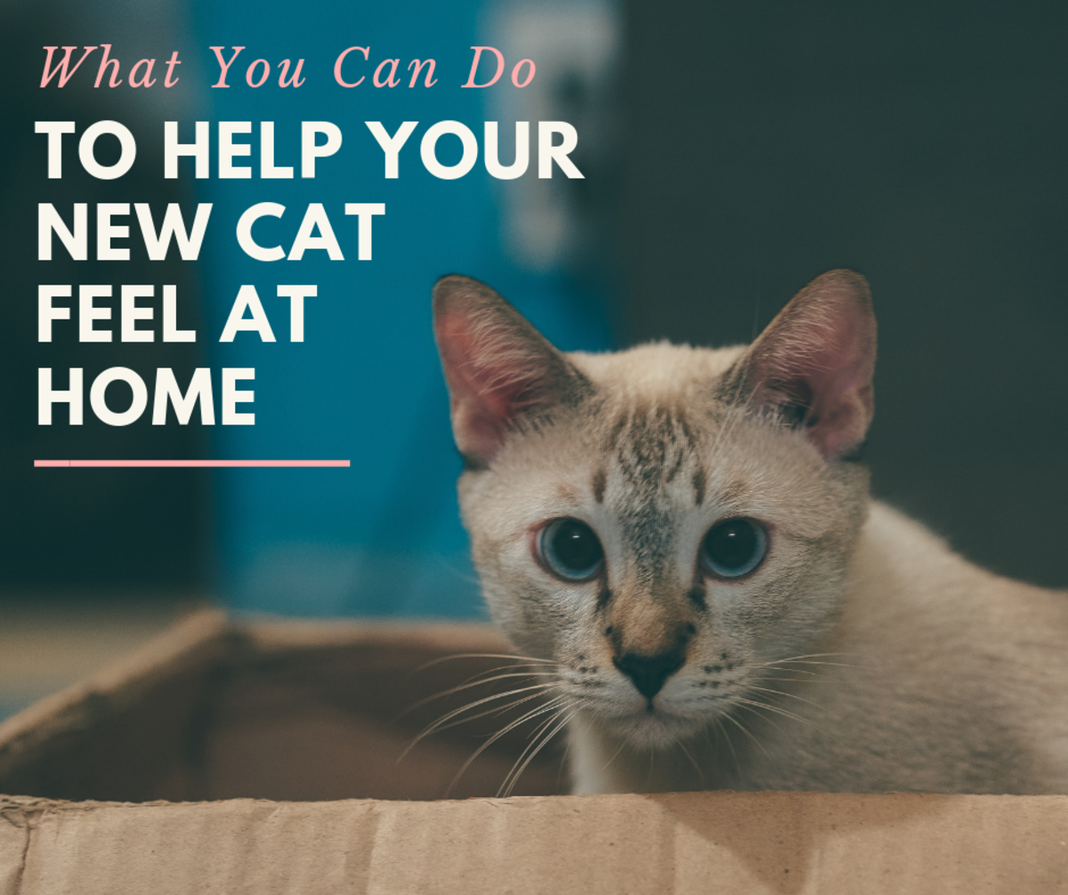 How to Help Your New Cat Feel at Home