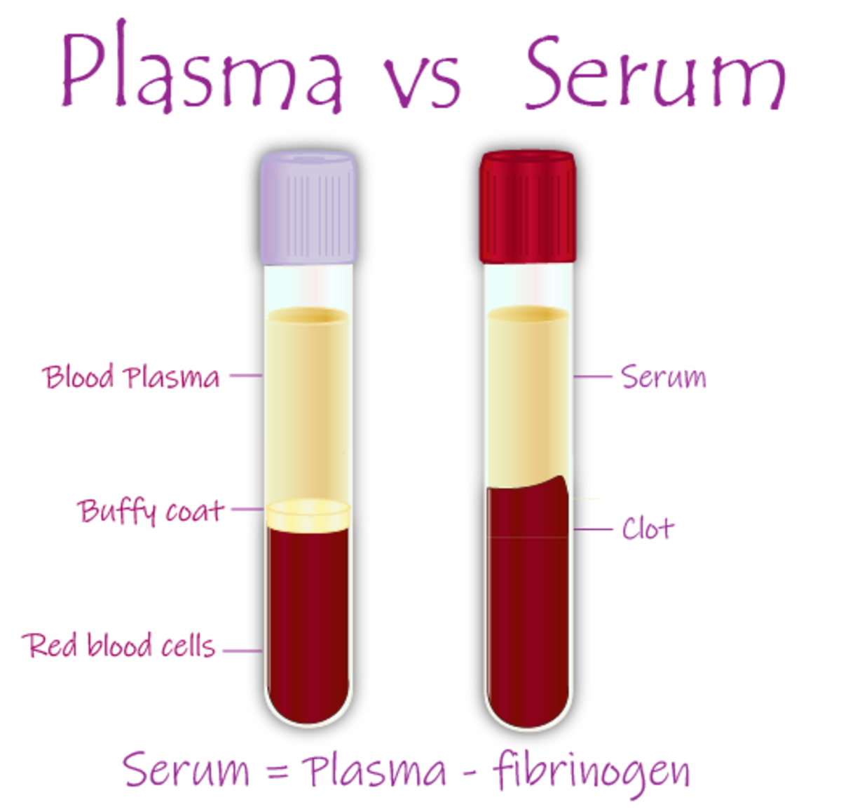 Plasma vs Serum