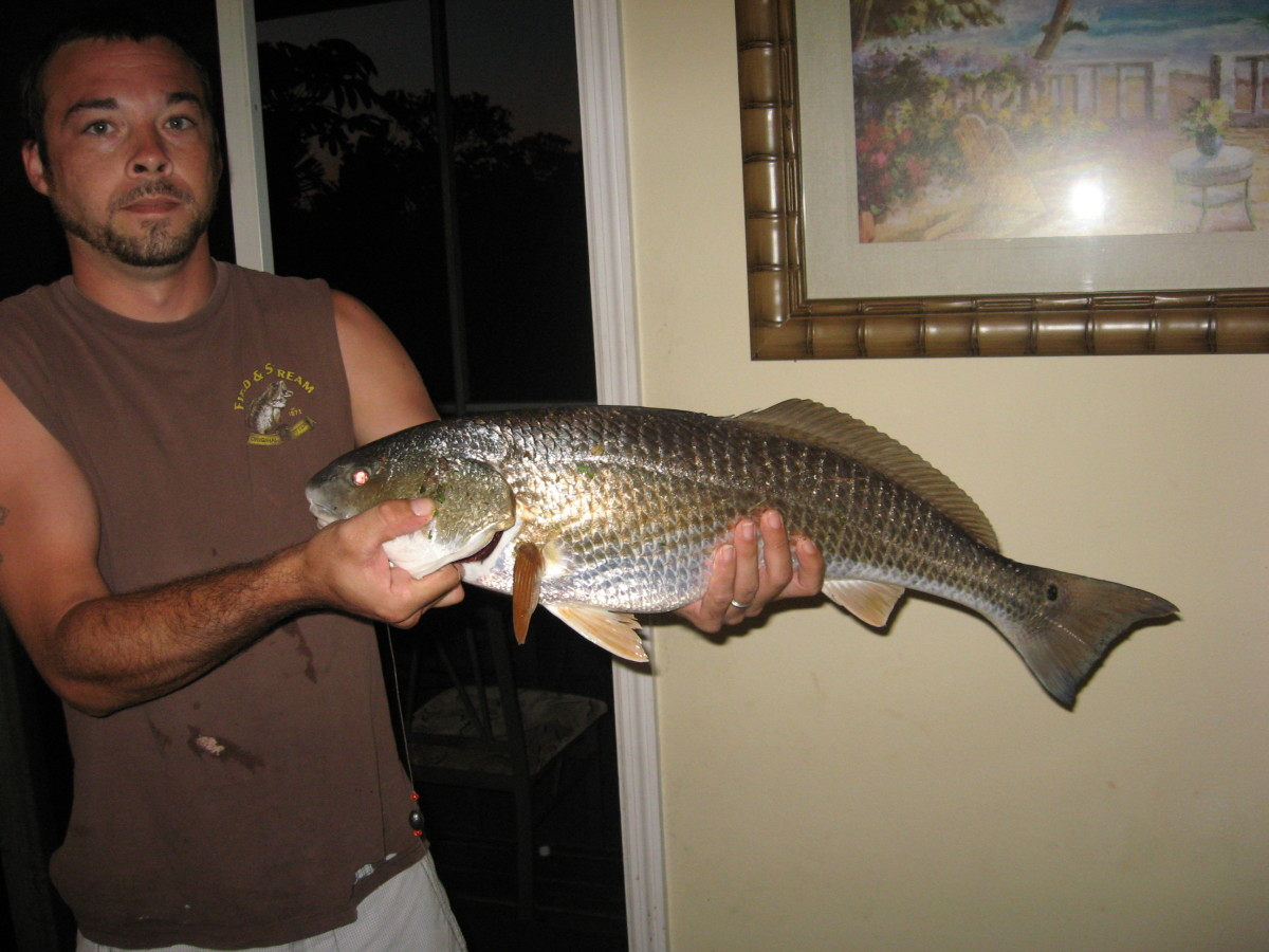 We've caught some big redfish from the Ft. Clinch Pier!