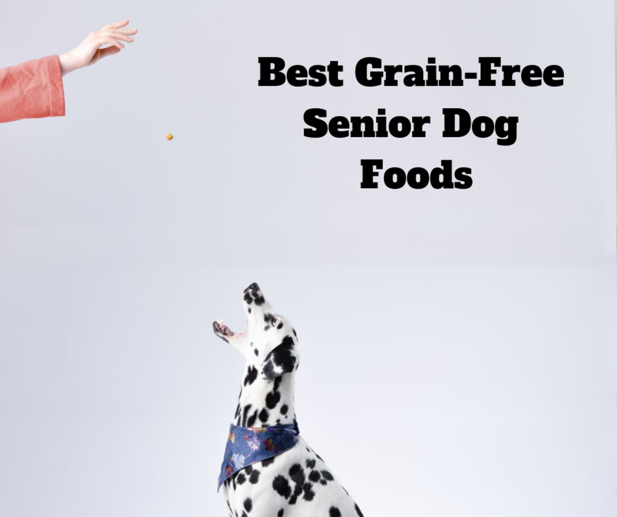 Reviews of Grain-Free Senior Dog Foods