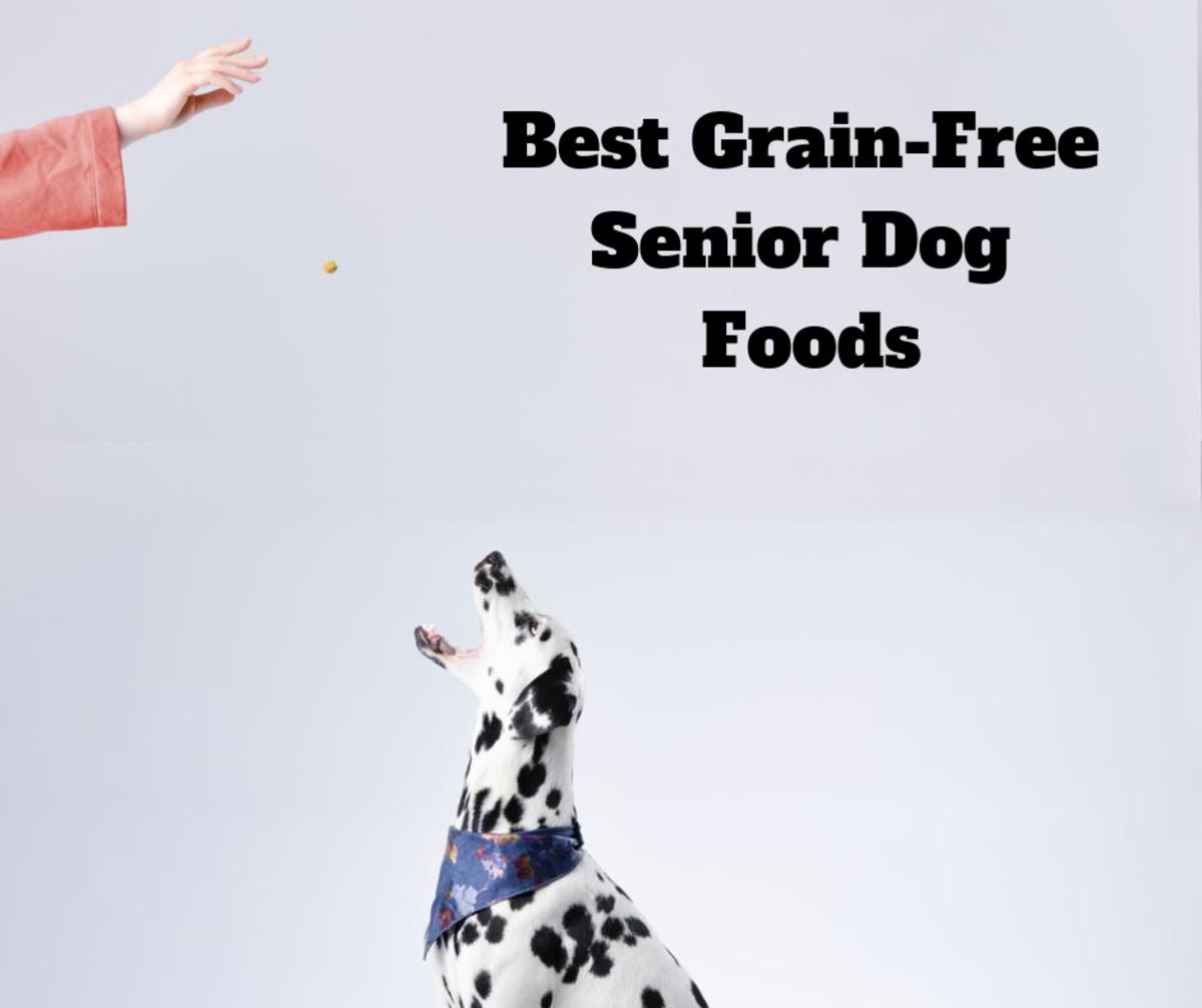 Reviews of Grain-Free Senior Dog Foods