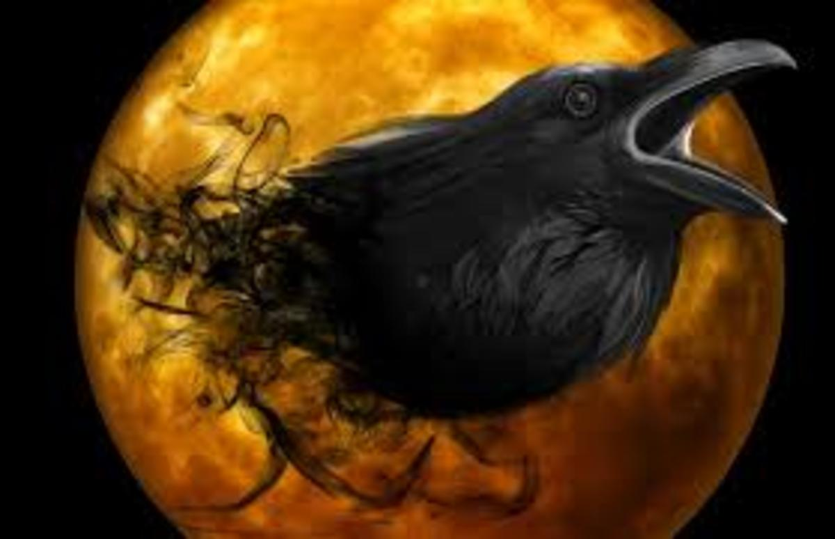 The Spiritual Importance of the Raven From a Tribal View: The Spirit of the Raven