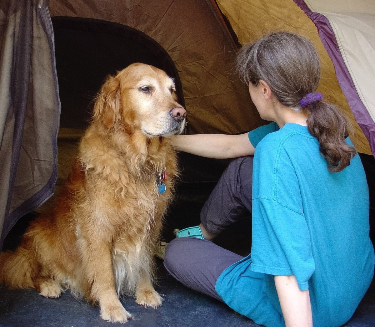 Rapamycin, mTOR, and Possible Anti-Aging Effects in Dogs