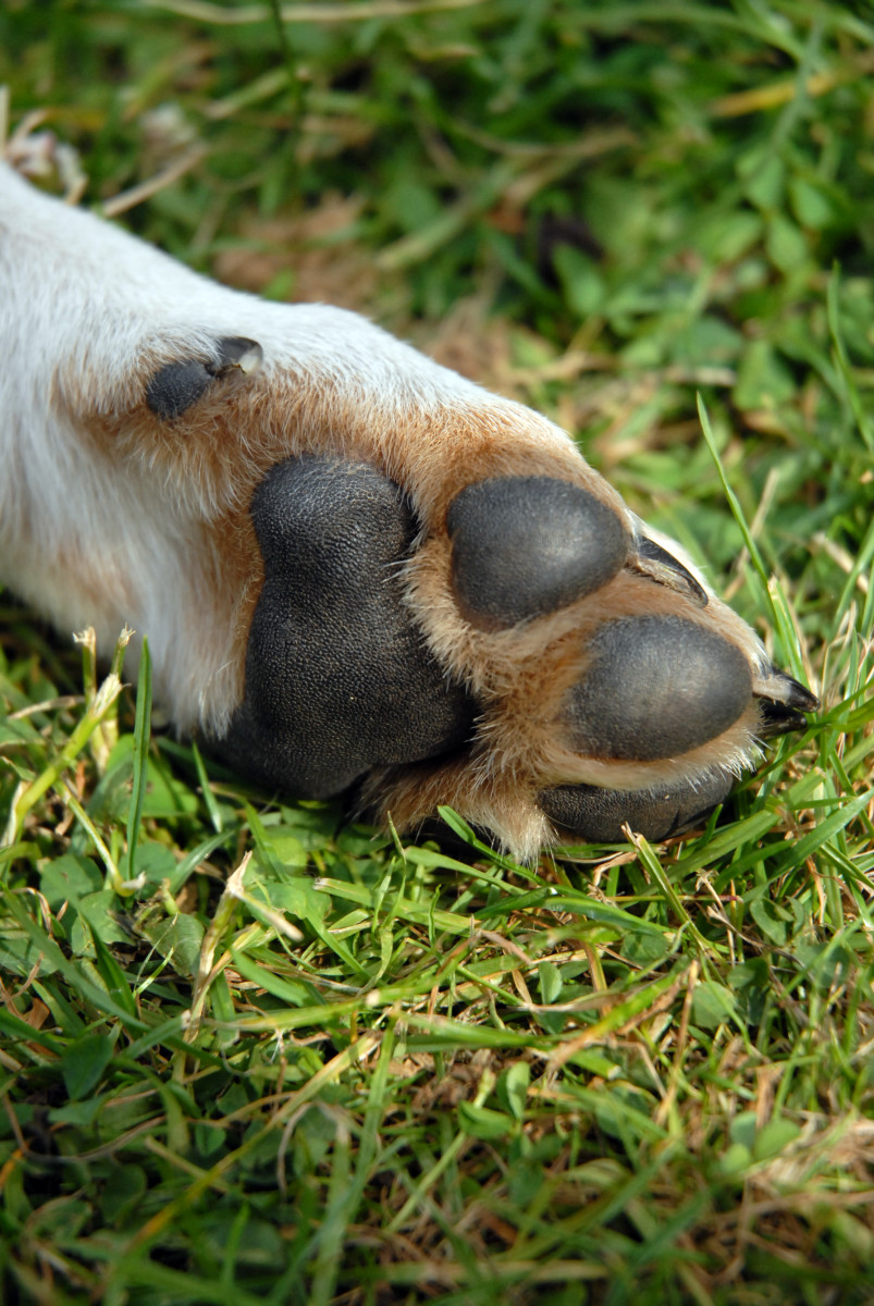 Different types of dog feet