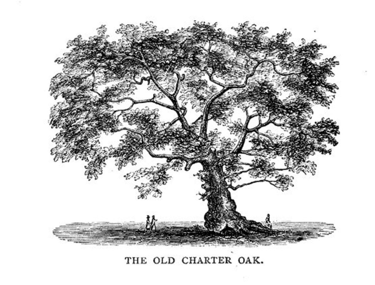 The Charter Oak—a Symbol of Peace and Freedom