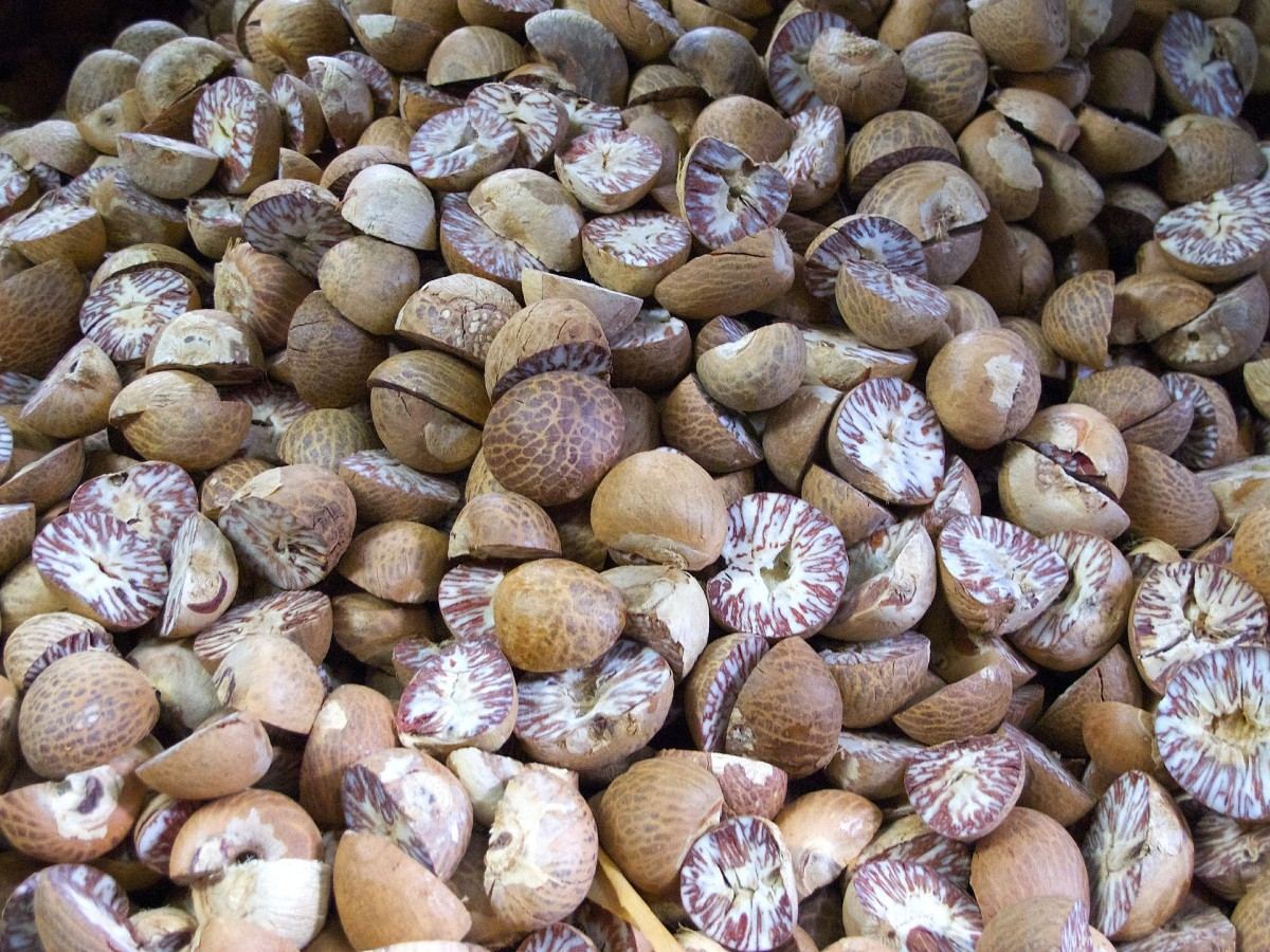 Nutmeg seeds/pits