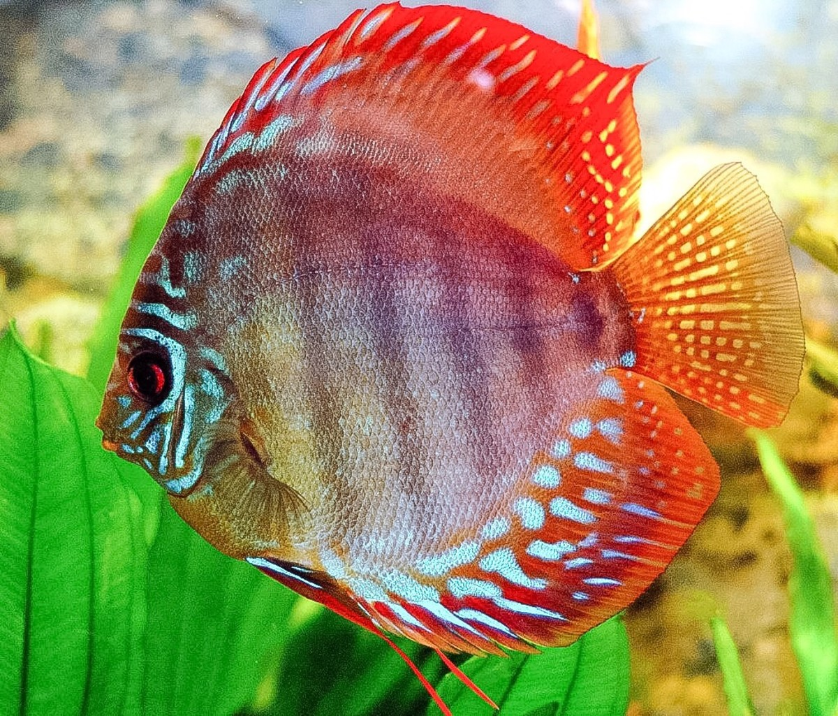 Fish Mucus: Composition, Functions, and Potential Uses