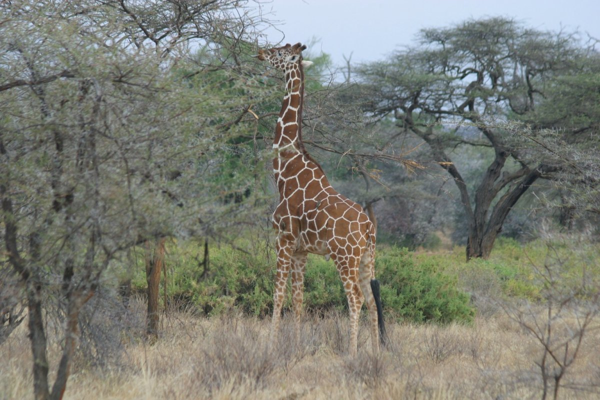 Kenya's Best Tourist Attractions- National Game Parks and More
