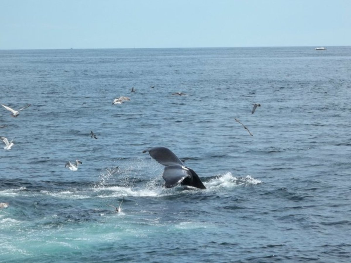 Cape Whale Watch