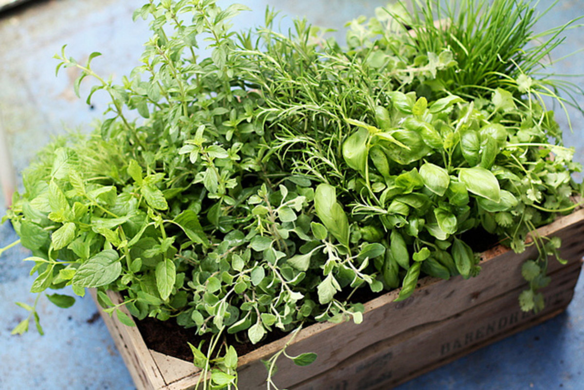 Even a small tub of herbs can provide many health benefits for you and your family.