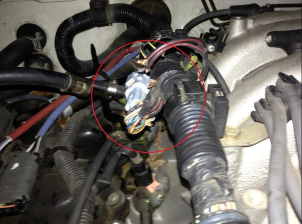 did you know your car had edible parts axleaddict rh axleaddict com Engine Wiring Harness Wiring Harness Connectors