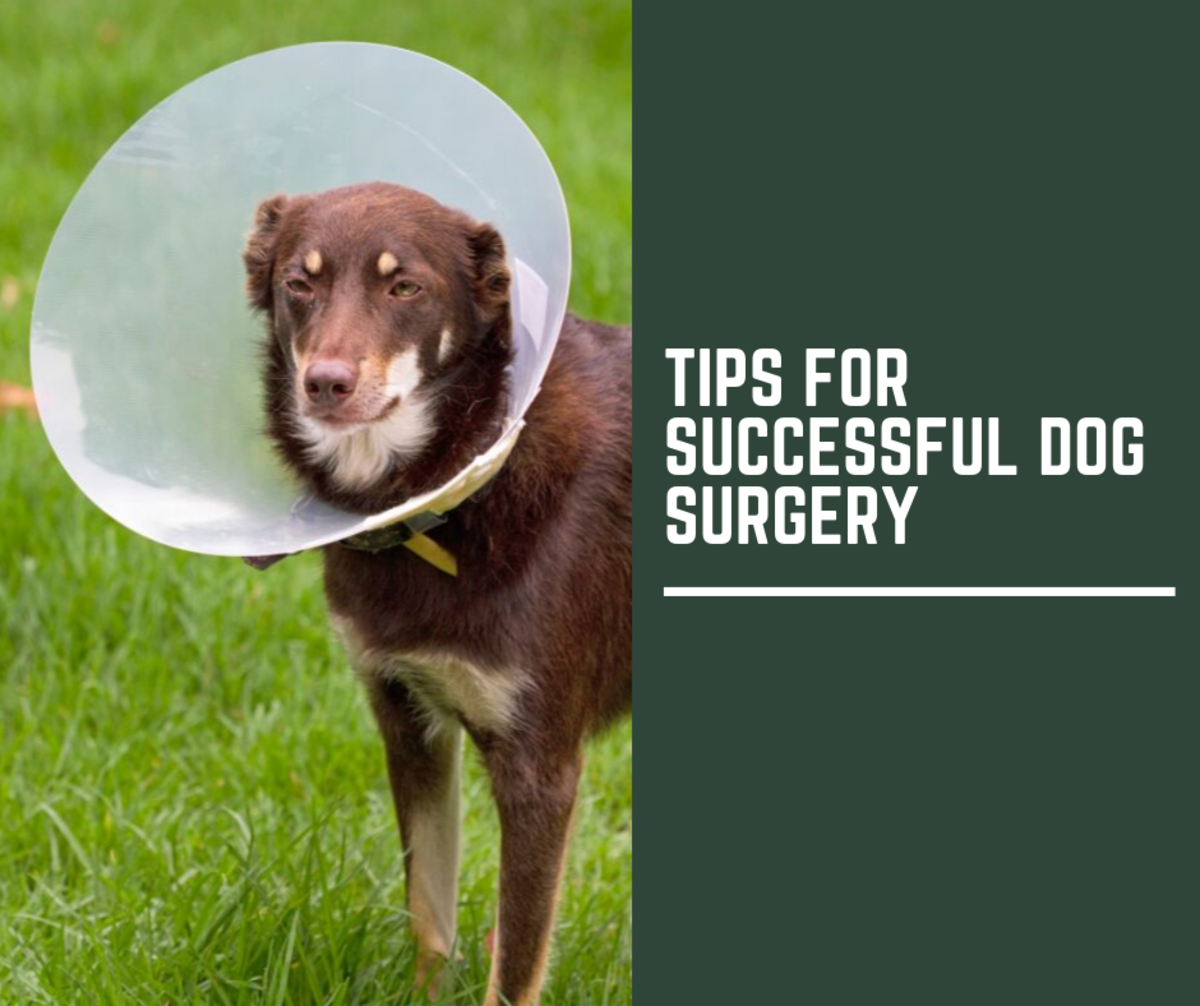 Ten Tips for Successful Dog Surgery