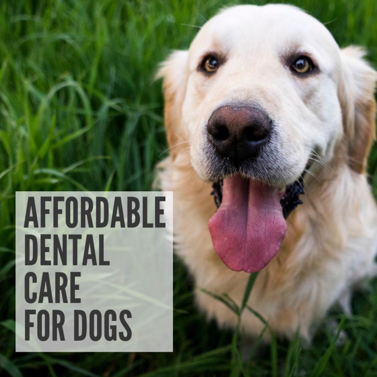 Cheap Dental Care for Dogs