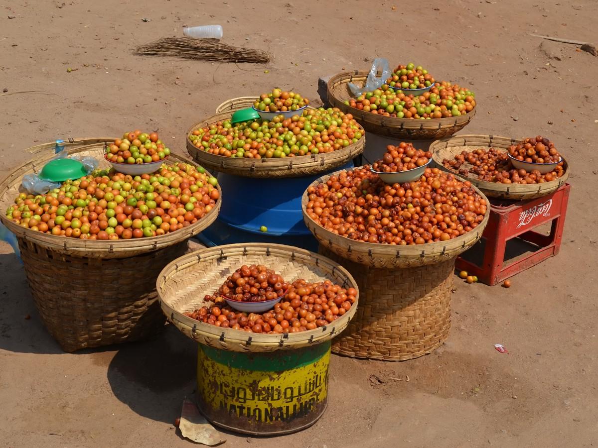 Ber, Bor or Jujube ripe & unripe fruits