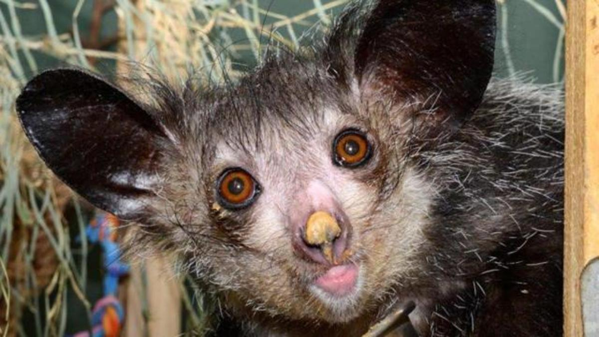 Top 10 Animals That Look Scary But Are Actually Harmless