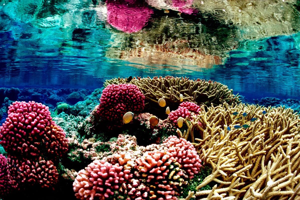 A coral reef at Palmyra Atoll National Wildlife Refuge