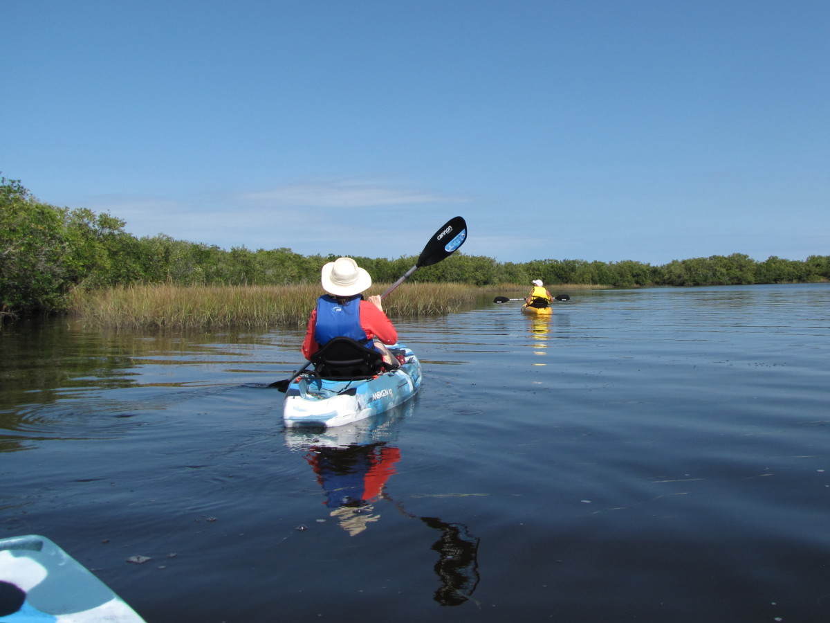 Kayaking the Werner-Boyce Salt Springs State Park,  Brasher Park Launching Point - Port Richey, Florida