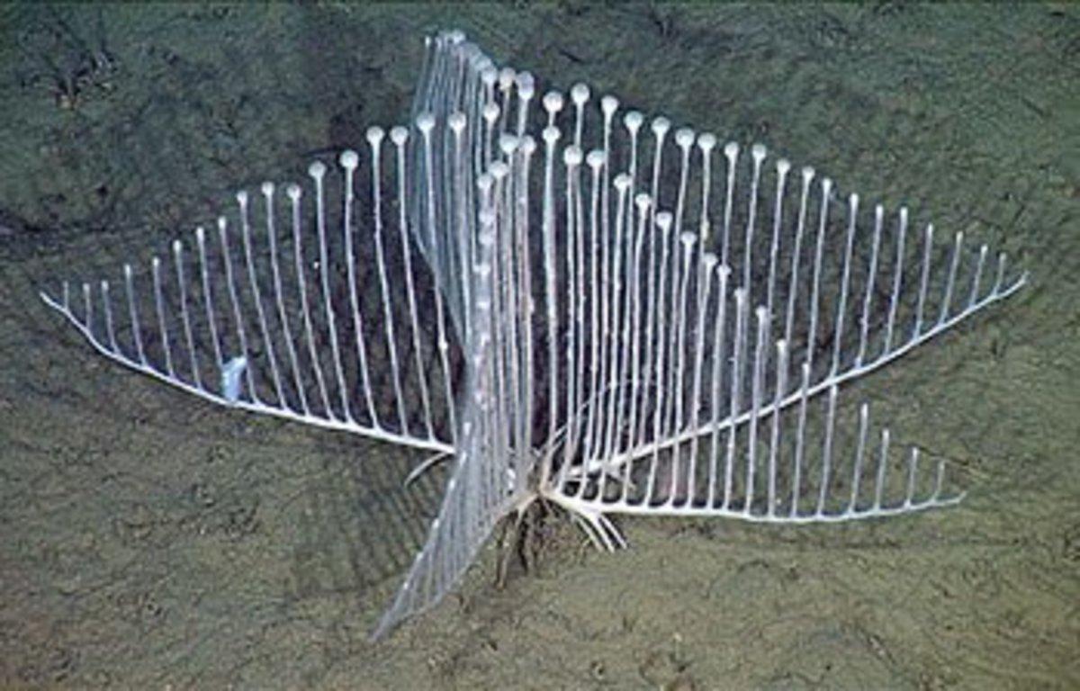Top 10 Weirdest Deep Sea Creatures