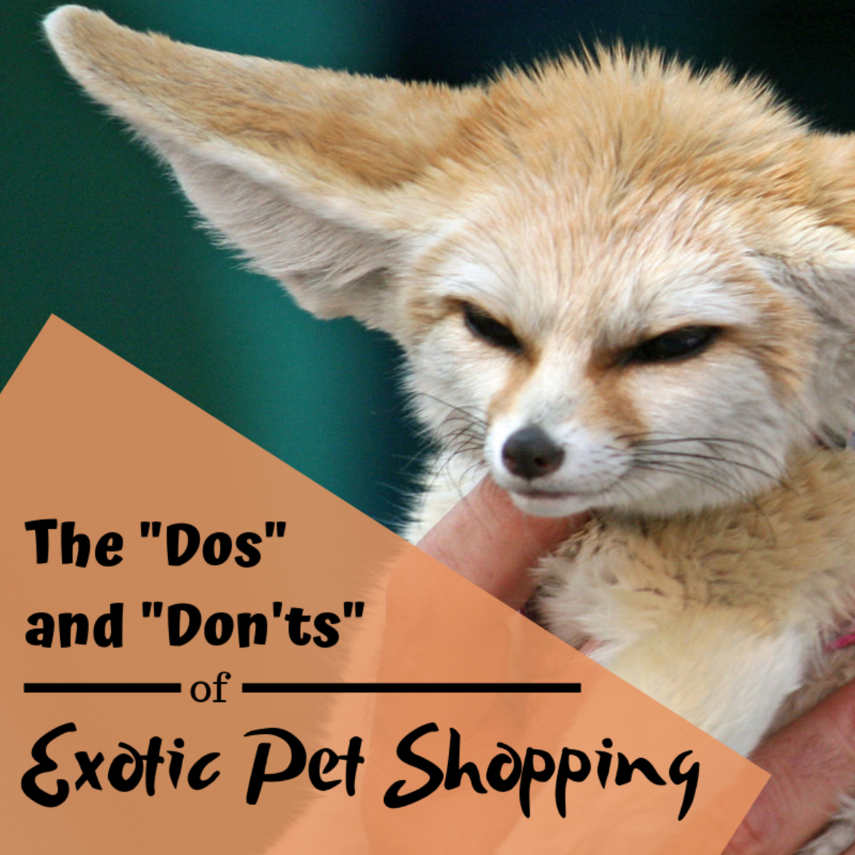 Exotic Animals for Sale: The Dos and Don'ts of Purchasing Pets Online