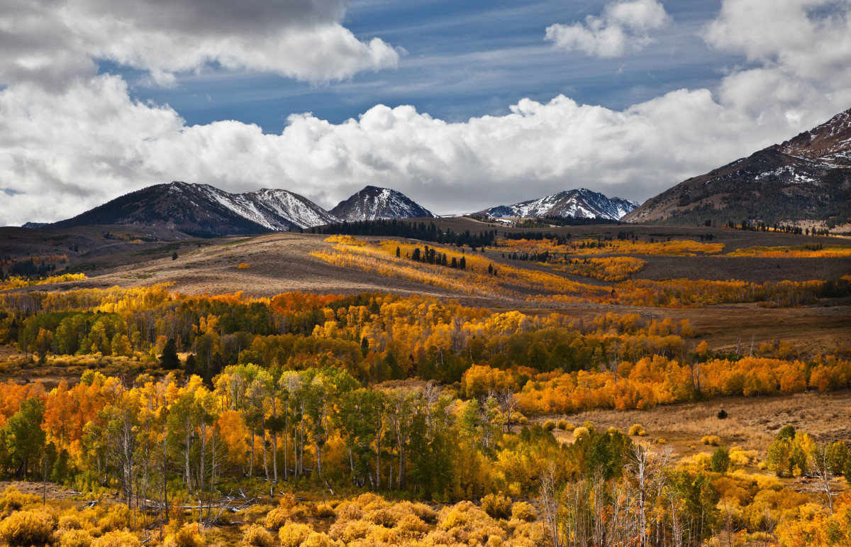 Aspen forests are often found high in the Rocky Mountains