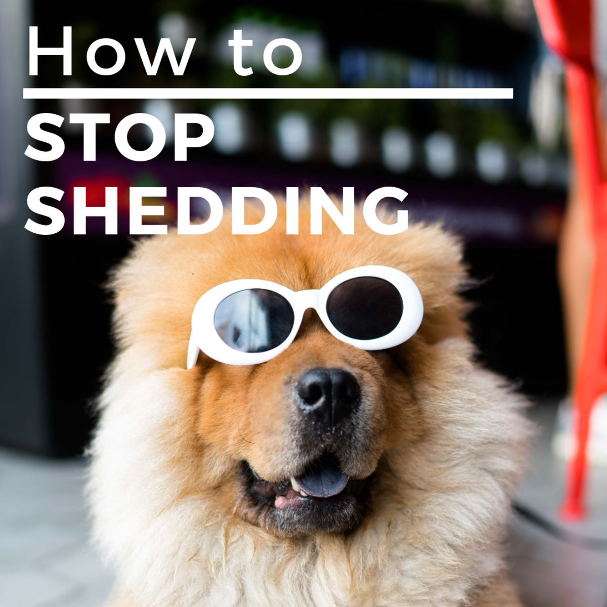 5 Ways to Stop Your Long-Haired Dog From Shedding