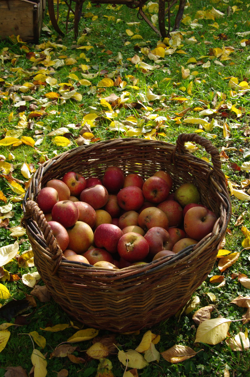 Delicious Autumn Recipes Inspired by Steilacoom's Apple Squeeze