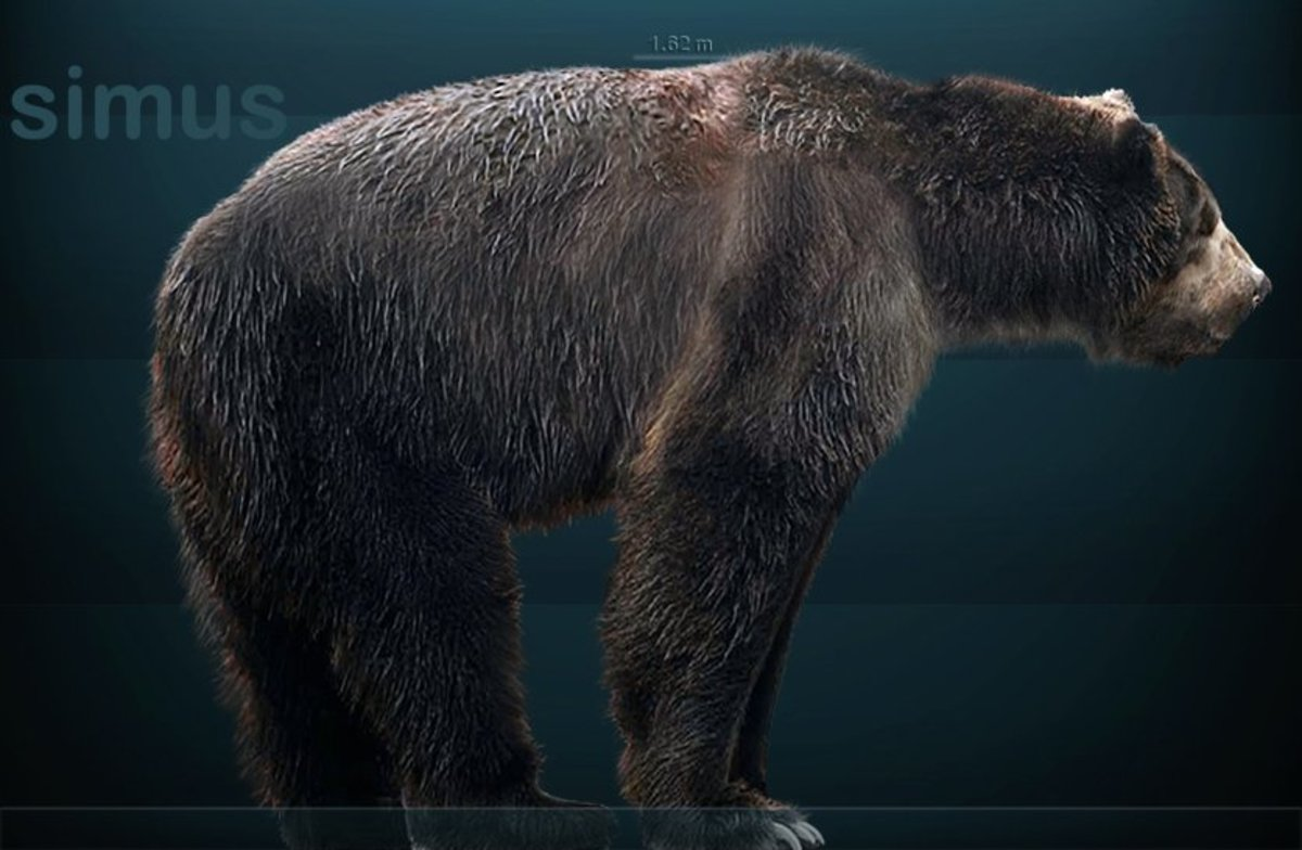 Giant Short-faced Bear Sightings: Is Arctodus Simus Still Alive?