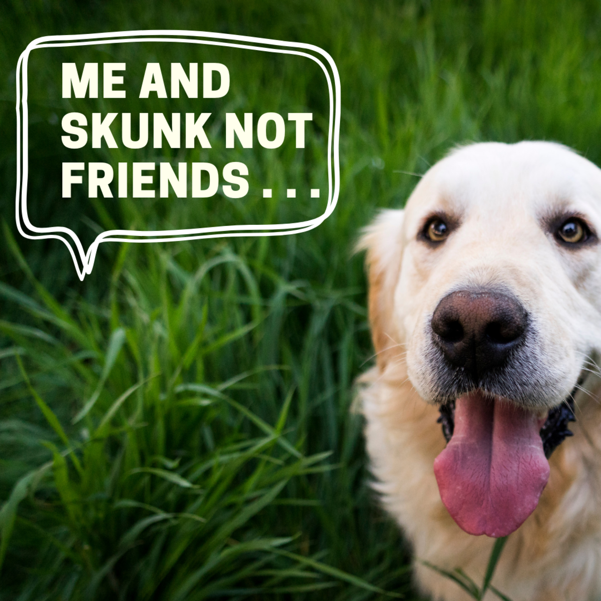 Remedies for Skunk Odor on Dogs