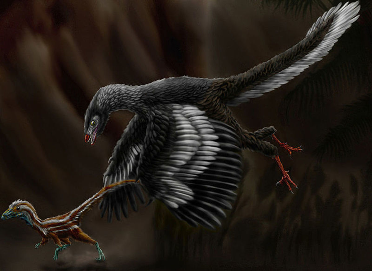 Artist's reconstruction of Archaeopteryx