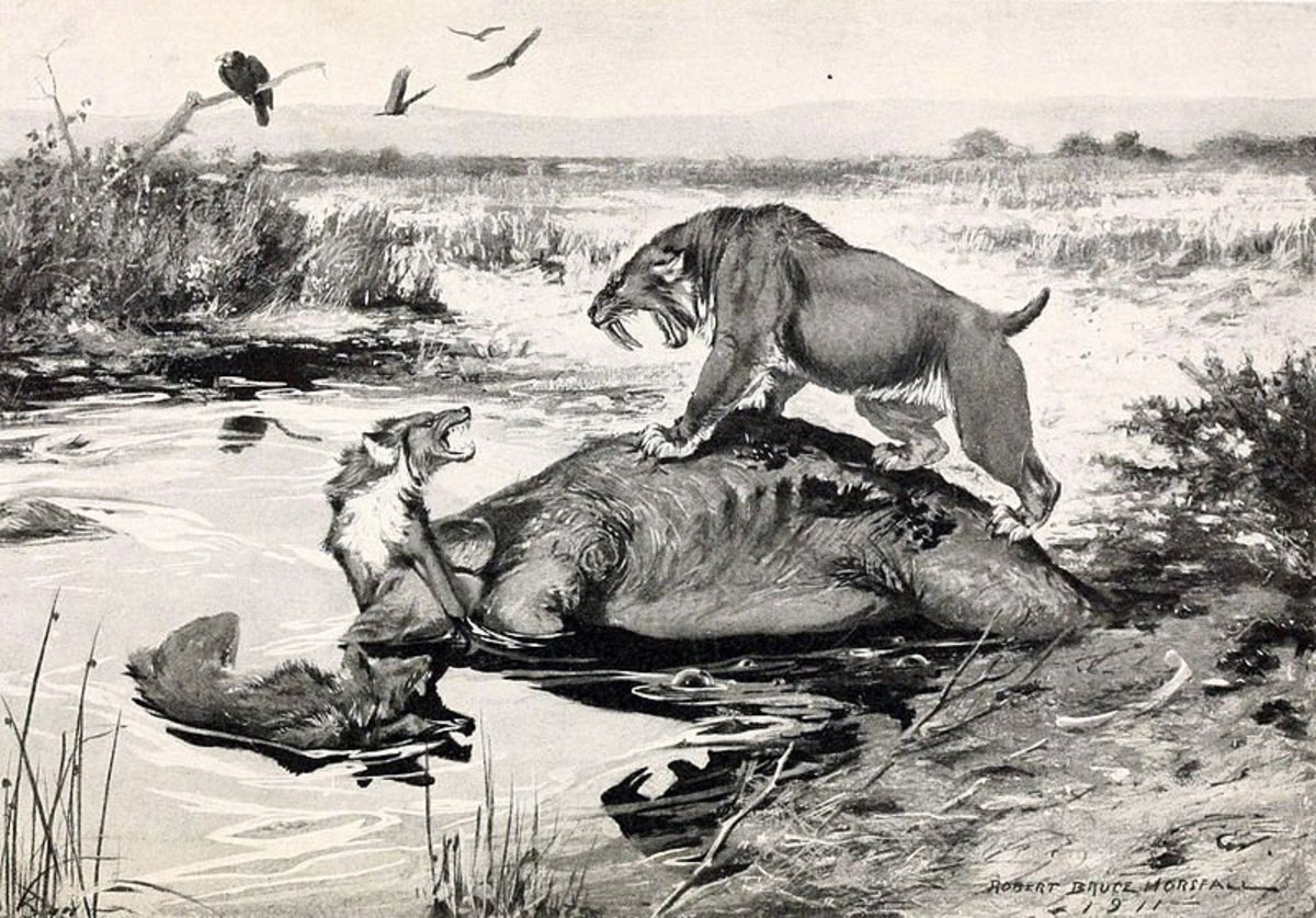 Prehistoric predators Smilodon and the dire wolf do battle at the La Brea Tar Pits.