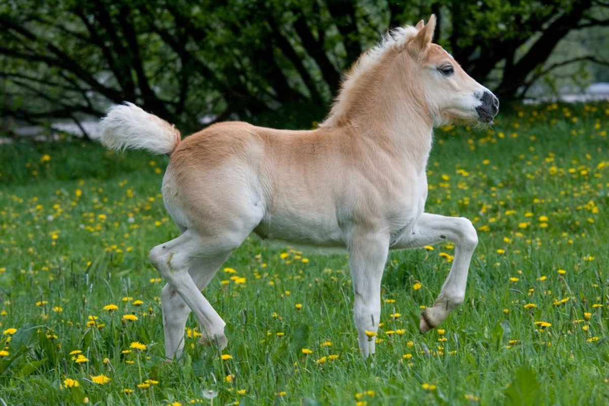 Everything You Need to Know About Ponies and Their Care