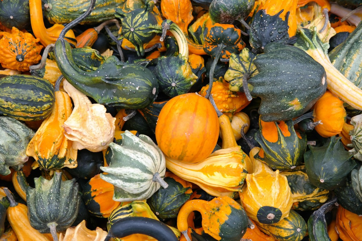 Winter Squashes (there might be a pumpkin in there)