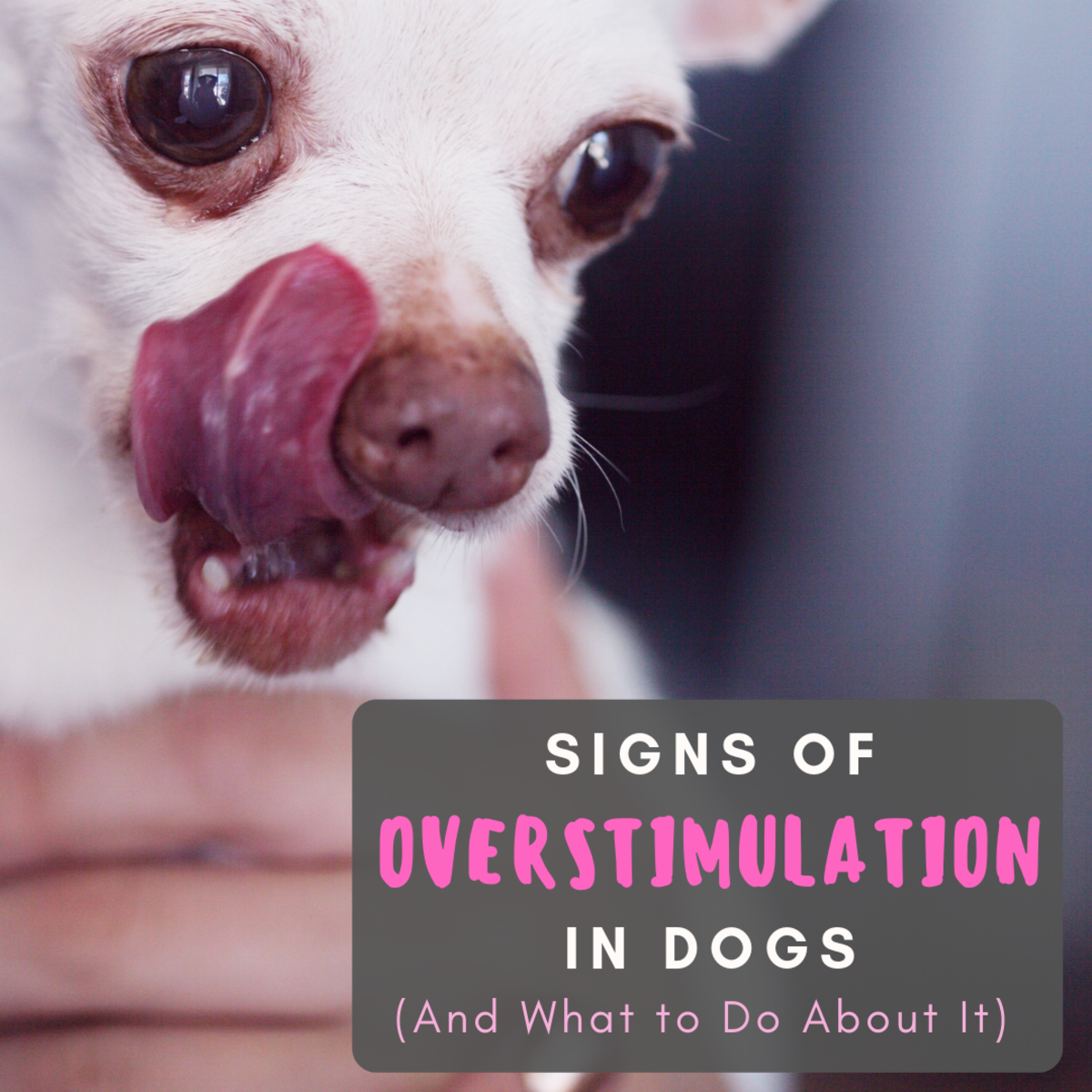 It is not uncommon for dogs to be overstimulated, and more exercise is not always the answer!